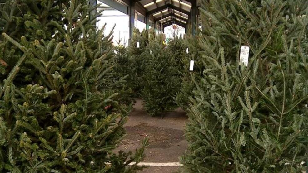 Fraser Fir Christmas Trees.Nationwide Fraser Fir Christmas Tree Shortage Could Continue